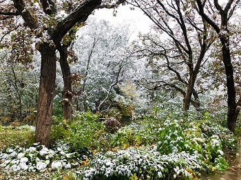 first snow in Tullamore Glen_350.jpg