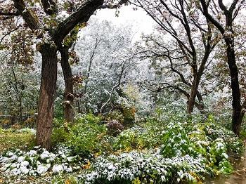 first snow in Tullamore Glen_350.jpg
