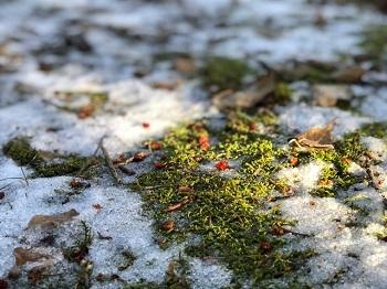 Sweet winter…