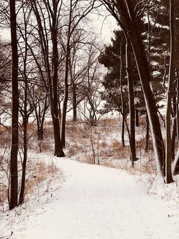 A winter walk…