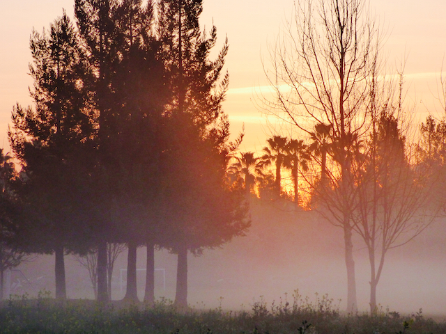 Picture of the morning fog near w. el camono aveneue in Sacramento taken on a morning walk.