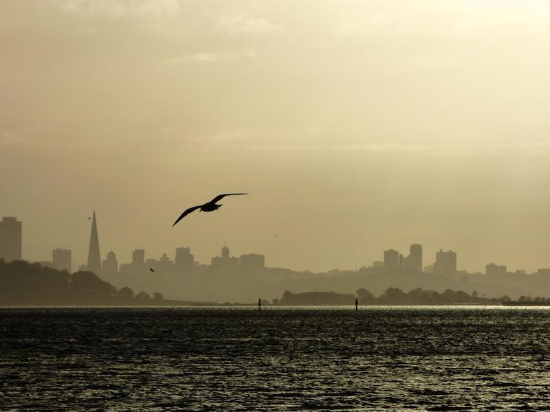 City Skyline with bird straight copy.jpg