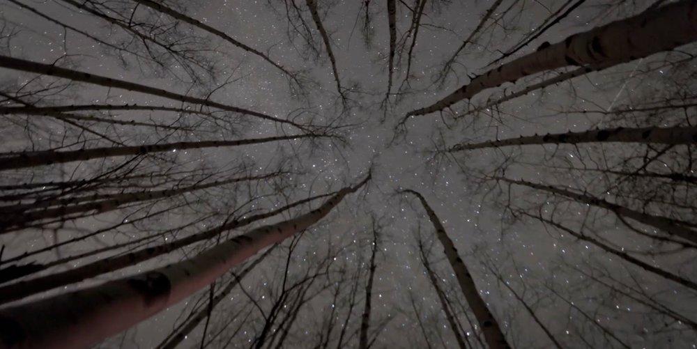 night sky through trees.jpg