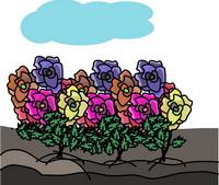 TN_garden_09.jpg