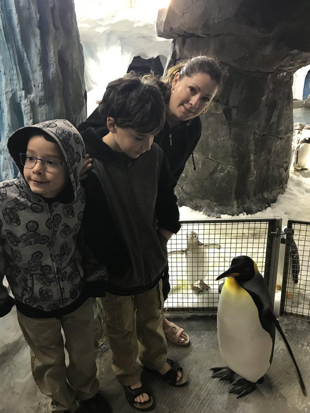 Seaworld Orlando Penguin Up Close Tour Review Magical Storybook