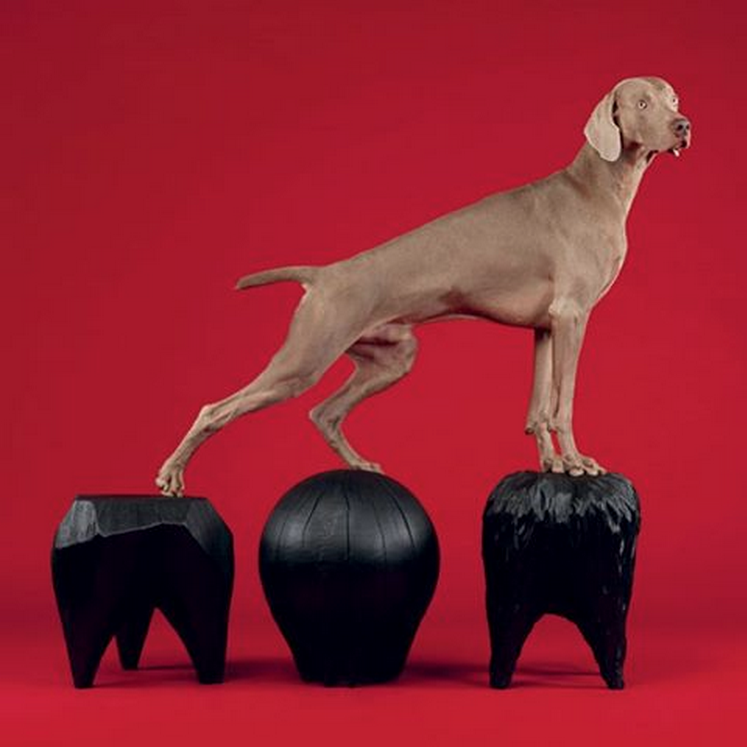 Kieran Kinsella Wallpaper Magazine William Wegman Dogs Stumps