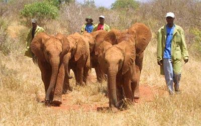 Younger-Tsavo-Orphans-10.03.jpg