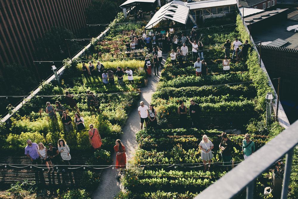 rooftop6.jpg