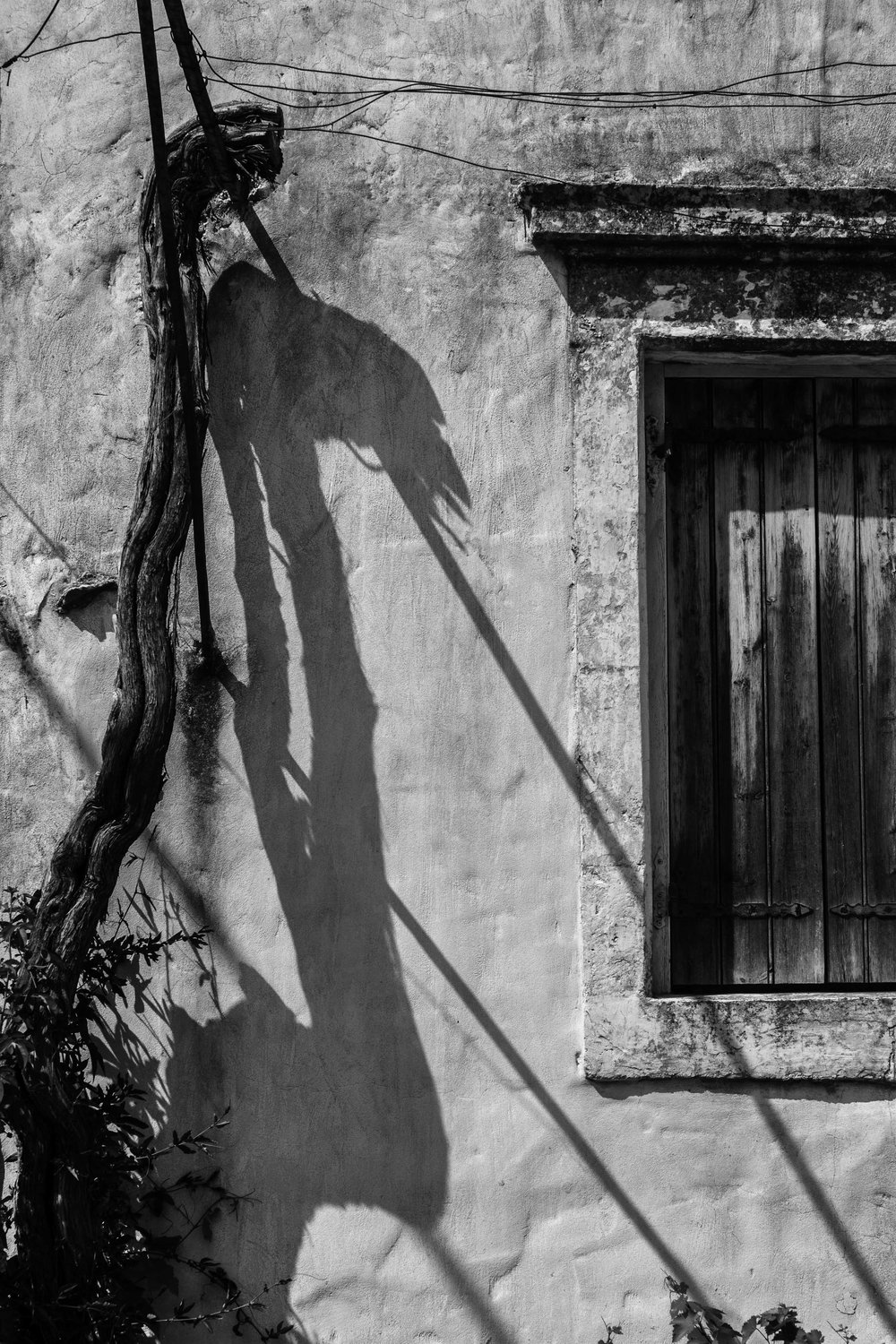 Vine and shadow, Kefalonia, Greece.