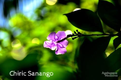 Chiric Sanango