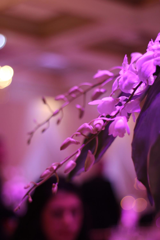 Nataly Elie wedding 204.JPG