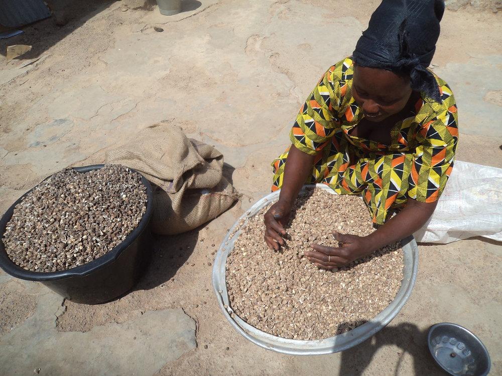 Atofuo Aziya preparing moringa seed for storage in Dasabligo village.JPG