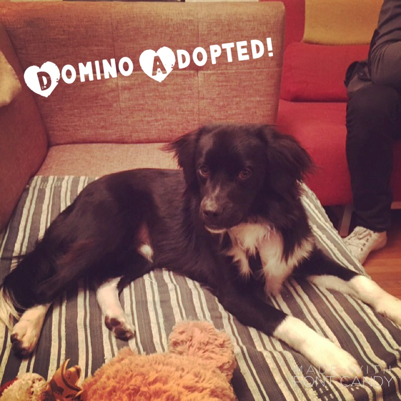 Domino Adopted!