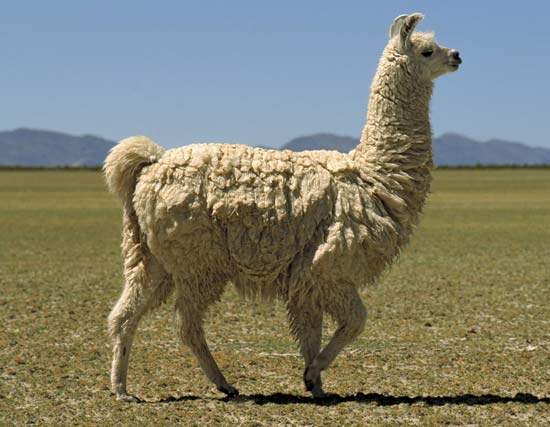 We're alldatarama llamas ...