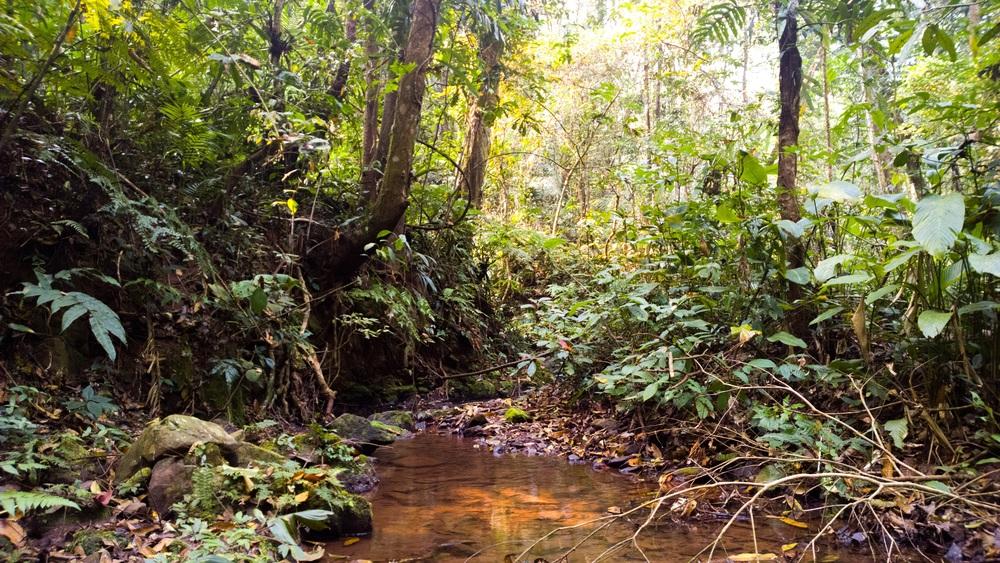 A little bit of jungle - shot on my Lumia 1020.