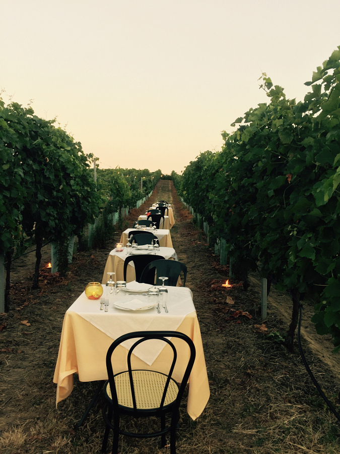 Dinner in the vineyards
