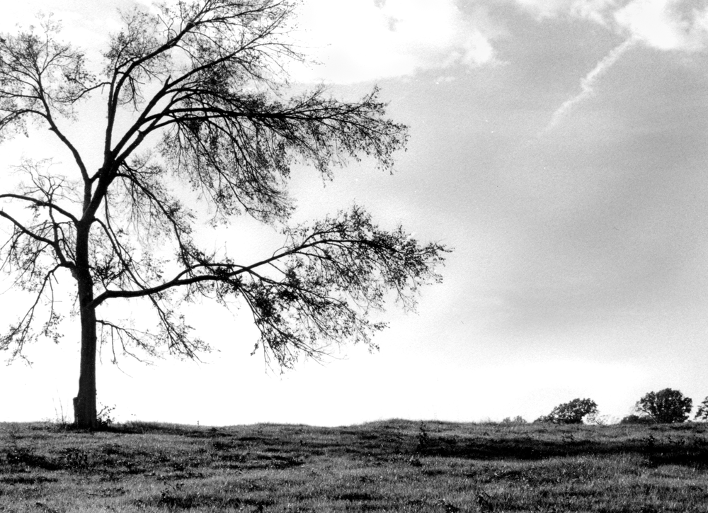trees_bw_temp2.png