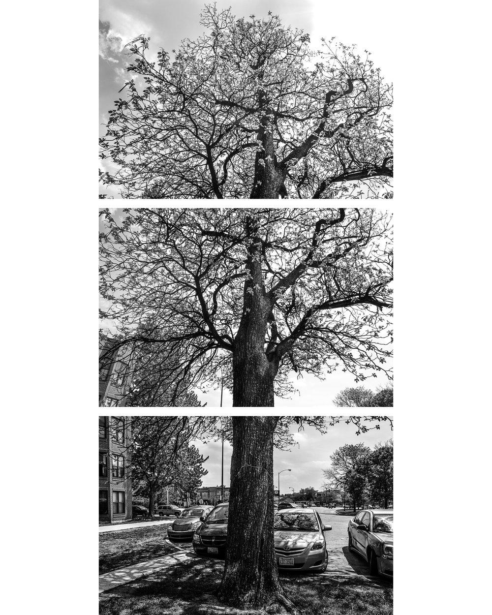 TriptychWebsite-.jpg