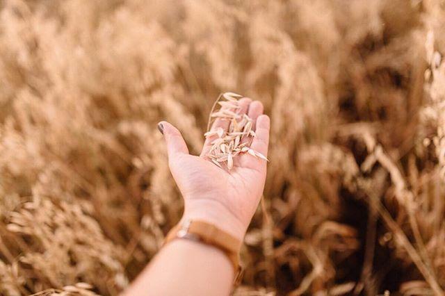 """""""Você é uma árvoreque nunca teria criado raízes tão profundas se o vento não o tivesse sacudido de um lado para o outro e feito você agarrar-se firmemente à Verdade.  Enquanto o trigo dorme confortavelmente na casca é inútil para a humanidade, ele deve ser debulhado para que seu valor seja conhecido. Portanto, é bom que o justo seja provado, pois isso o faz crescer em Deus."""" -Spurgeon .  Obs: Quando tirei essa foto, lembrei desse devocional que me marcou profundamente. Tudo fala."""