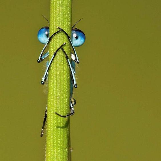 Dragonfly hiding.jpg