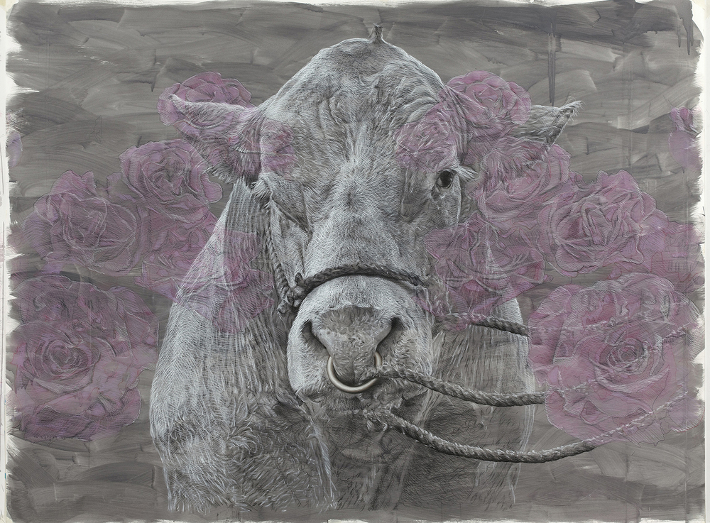 bovine dreaming II  2013 chalk and charcoal on acrylic washed paper  145 x 200 cm