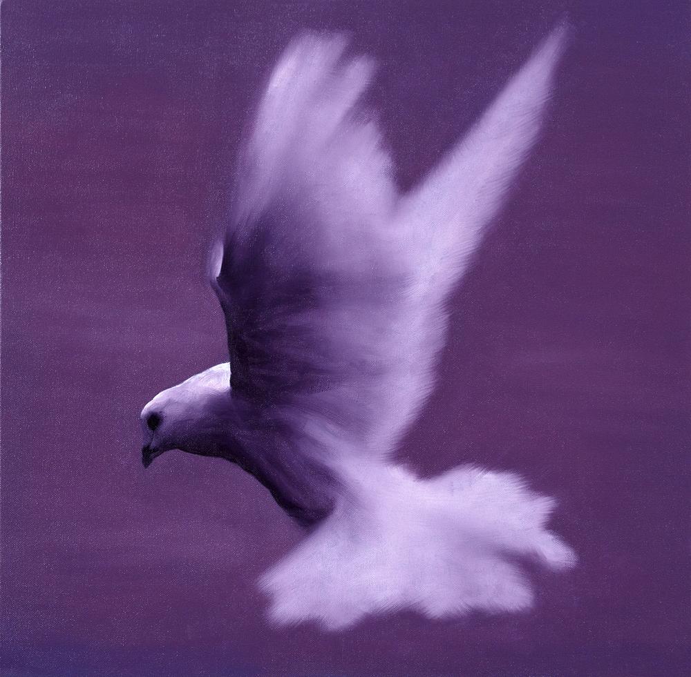 dove IV  2015  oil on canvas  50 x 50 cm
