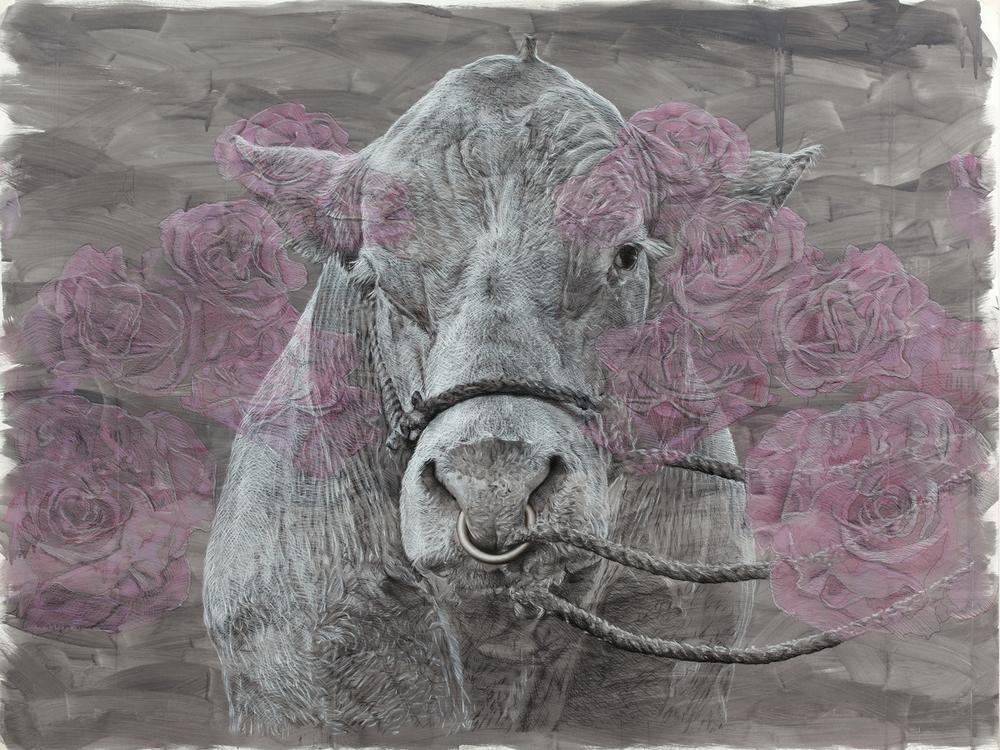 Bovine-dreaming-Roses.jpeg