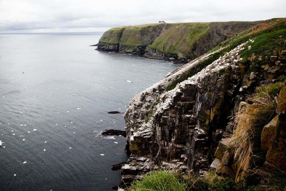 03 Newfoundland-10.jpg