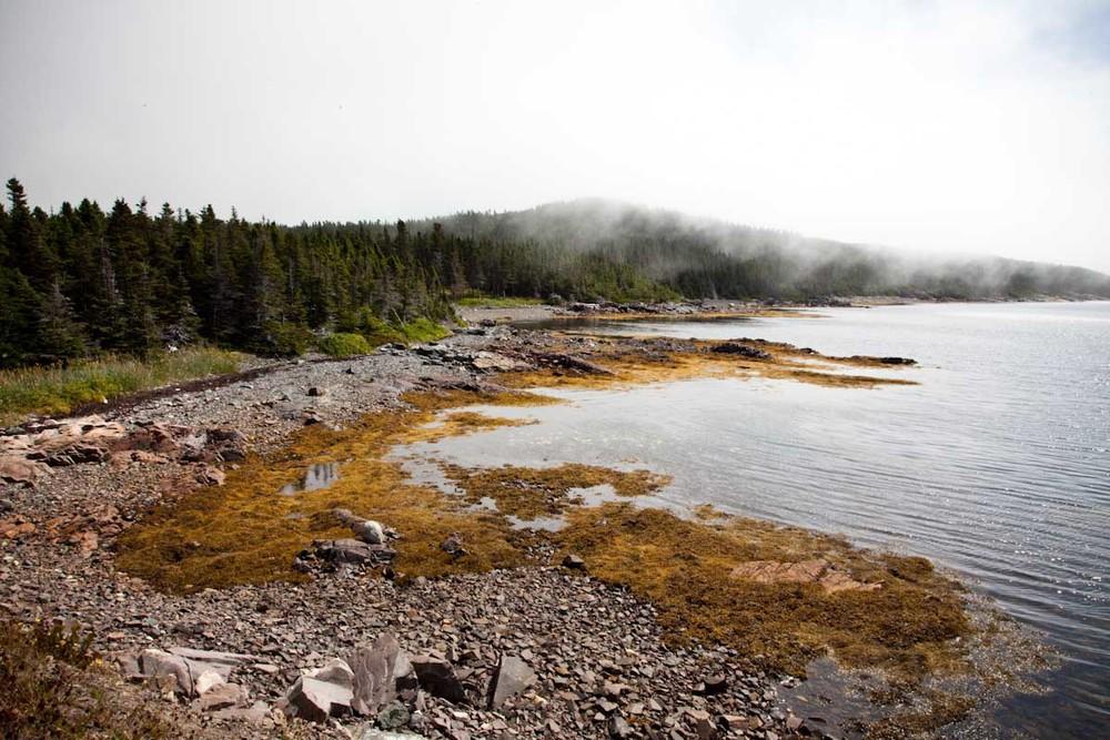 23 Newfoundland-16.jpg