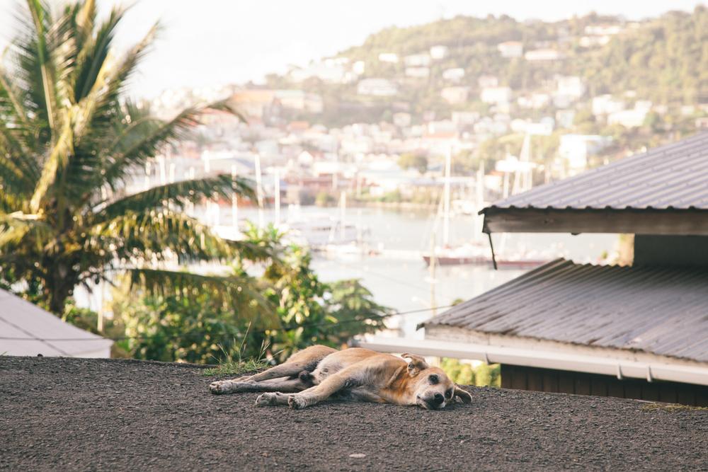 Grenada_WEB-26.jpg