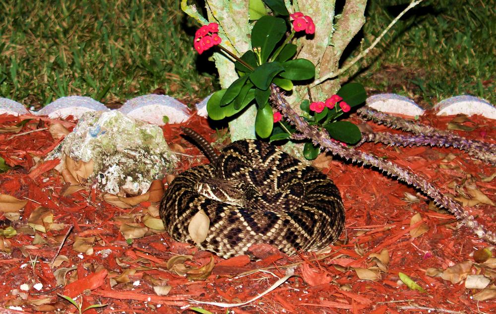 rattlesnake01.jpg