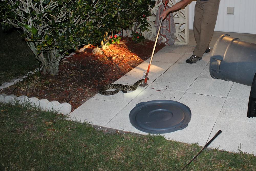 rattlesnake03.jpg