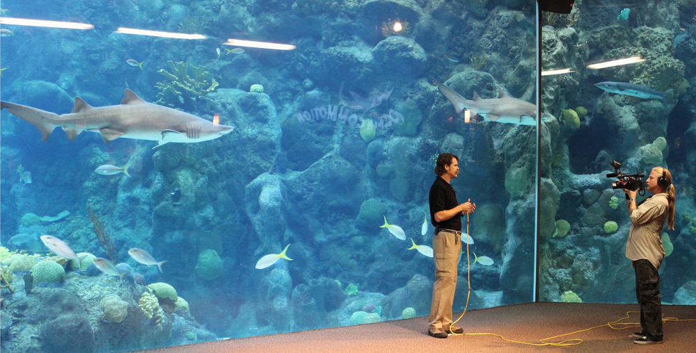 On location at the Florida Aquarium. L-R: Sand Tiger Shark, Associate Curator - Eric Hoveland and Brooks Paxton.