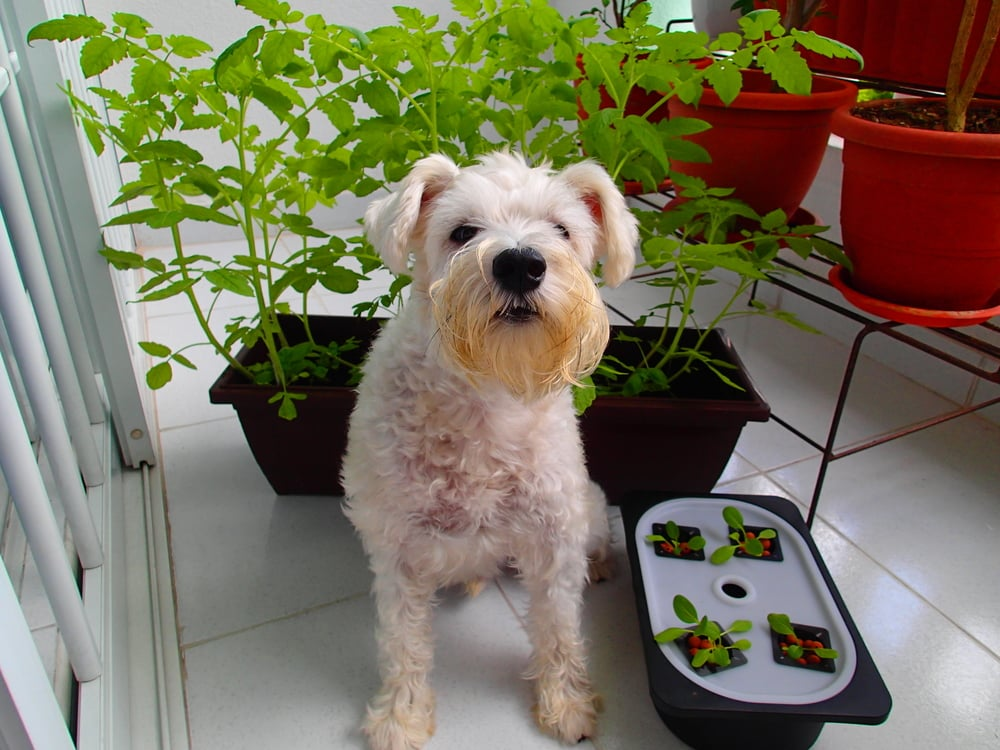 Ranulph agrees, gardening is good for you, and also says he now has Instagram: http://iconosquare.com/posingpooch