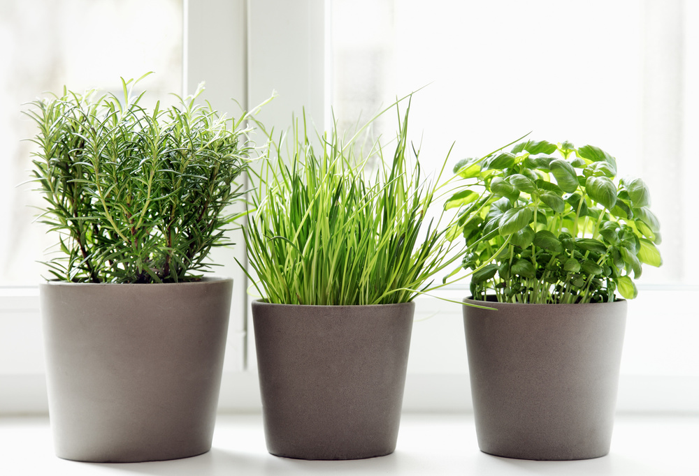 They don t just taste good  they look pretty good too. 6 Best Herbs to Grow Indoors   Urban Farmerly   Tips  Tricks and