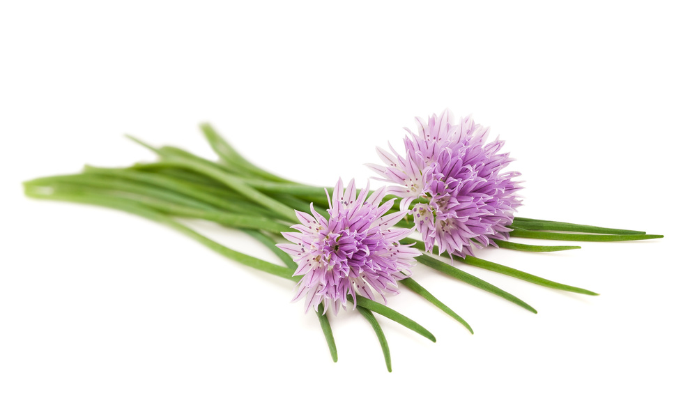 The edible flowers on chives will add a splash of colour too, and pack a flavour punch