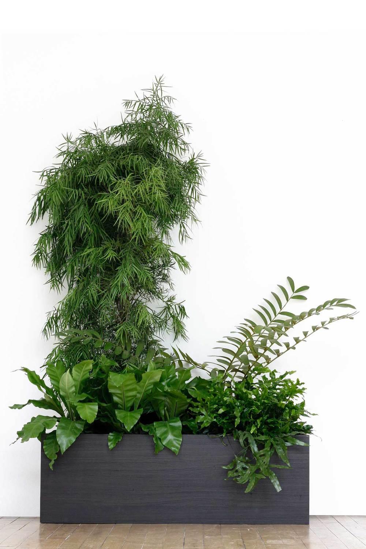 The Carboniferous garden:Afrocarpus gracilior, Zamia furfuracea, Asplenium nidus, Microsorum pustulatumandPsilotum nudum.Image ©In Situ Plants.