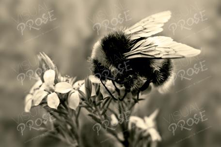 VisualProse_Bumblebee_ContactUs_Copyright.jpg