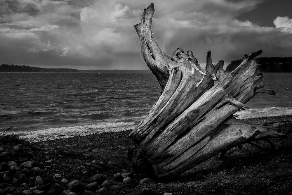 Driftwood-1.jpg