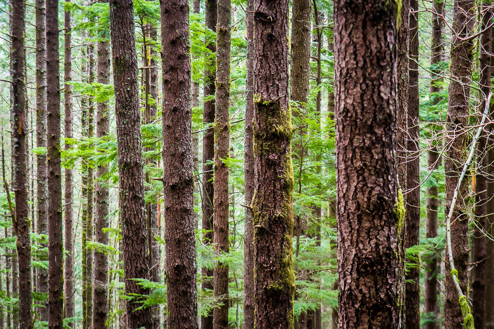 lake anette trees-1.jpg