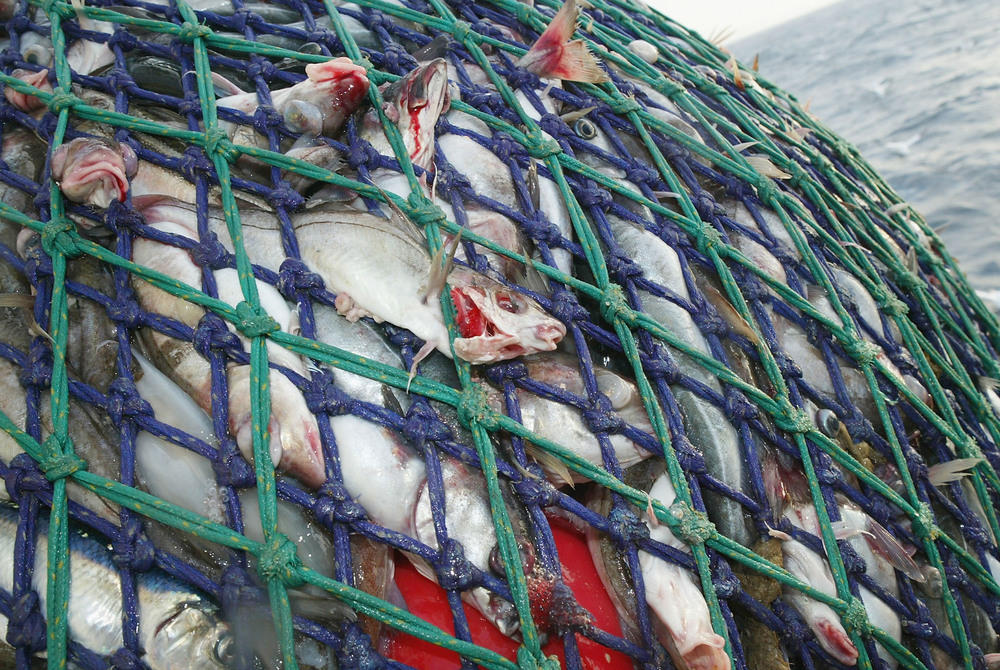 World over fishing has become an issue for Stormline.Photo by Christopher Furlong/Getty Images News / Getty Images