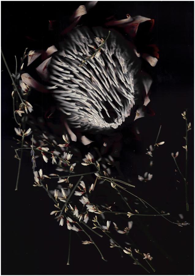 "Mi rey[na] , 2014.Photograph. Digital c-type print. 30"" x 45"""