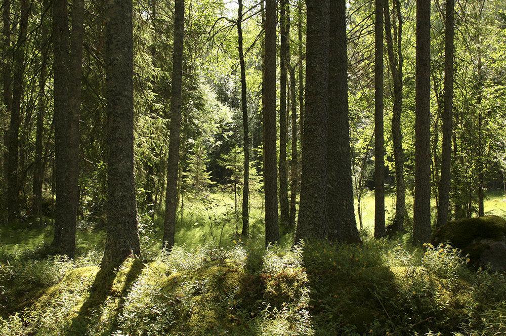 Inspiration till Skog