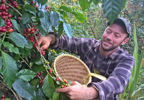 Chàng trai người Mỹ tự tay hái chọn những quả cà phê Arabica chín đỏ tại vùng đất Lang Biang