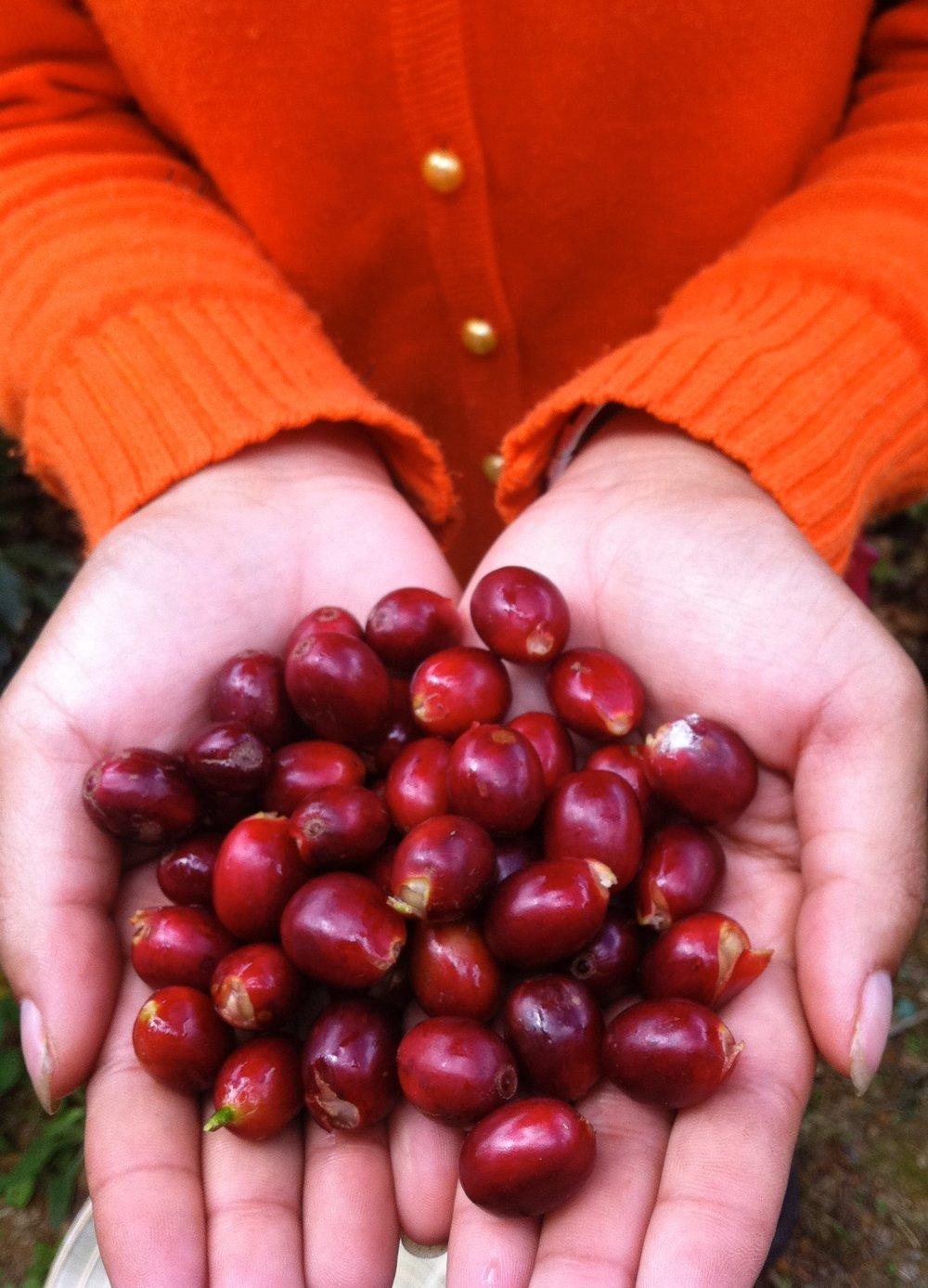 cherries2.jpg