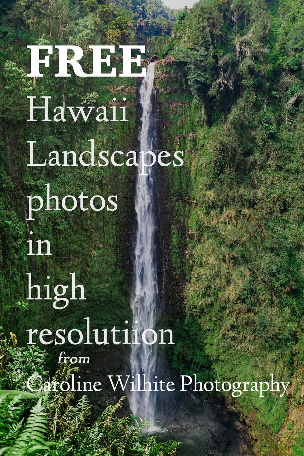 Free Hawaii Photos from Caroline Wilhite Photography