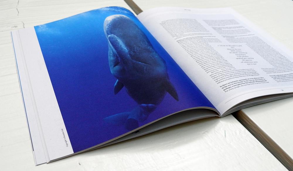 Sirene-Magazine-03.jpg