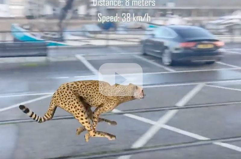 cheetahrun.jpg