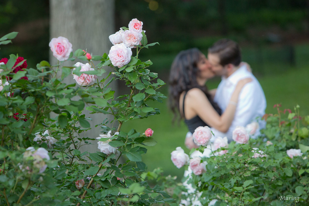 Central Park Roses.jpg