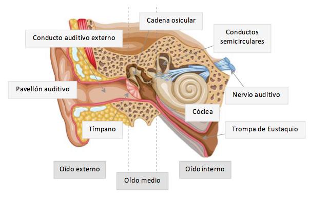 Audición, pérdida auditiva y sordera — Laura López